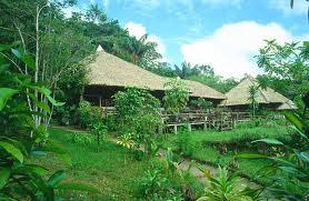 peterwurm amazonas